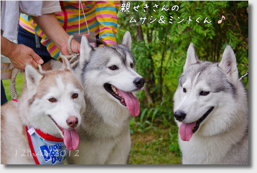 DSC_2483h1.jpg