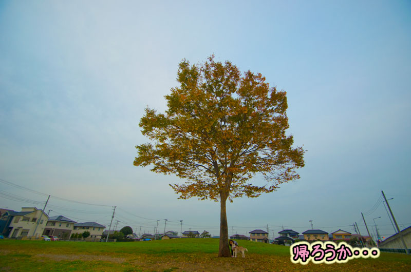 DSC_2650-11.jpg