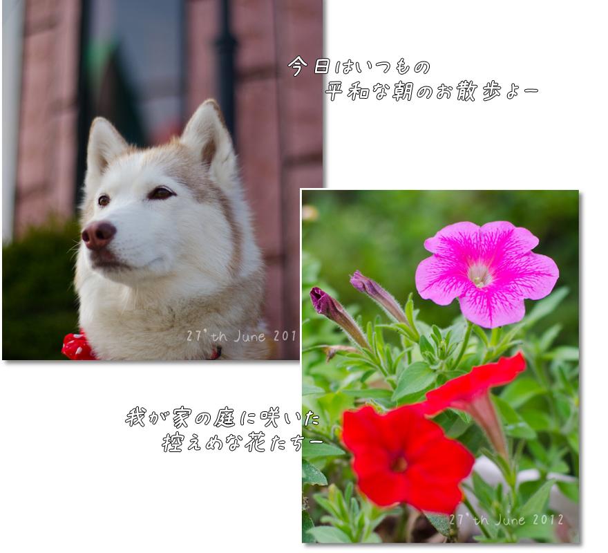 DSC_2760g1.jpg