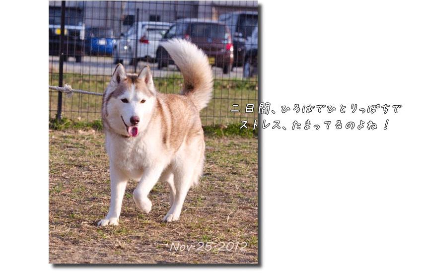 DSC_2760k1.png