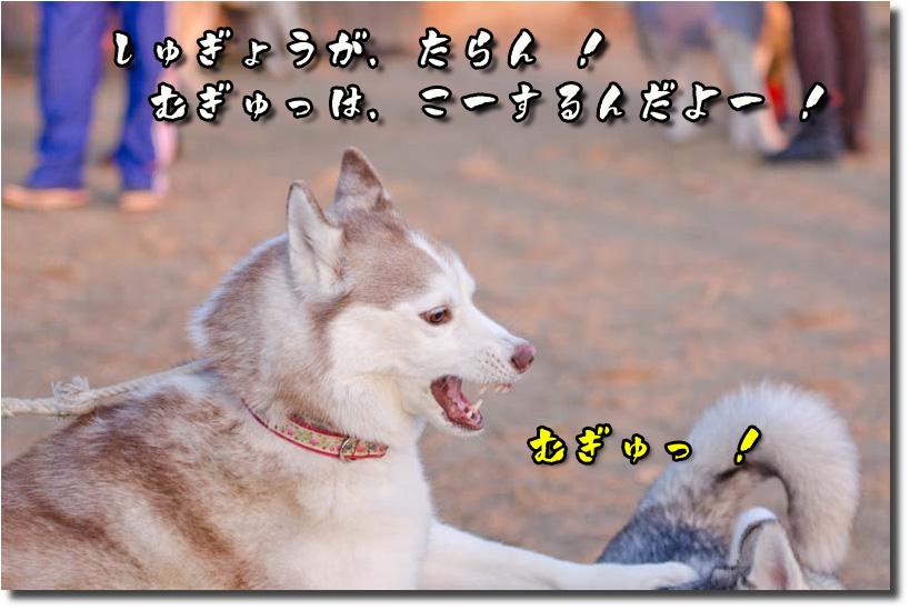 DSC_3091k1.jpg