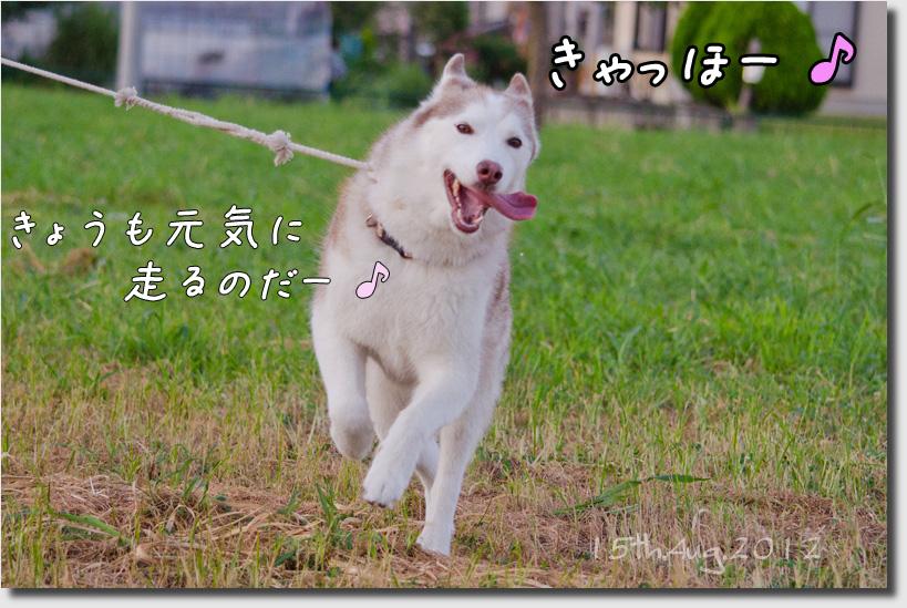 DSC_3179h1.jpg