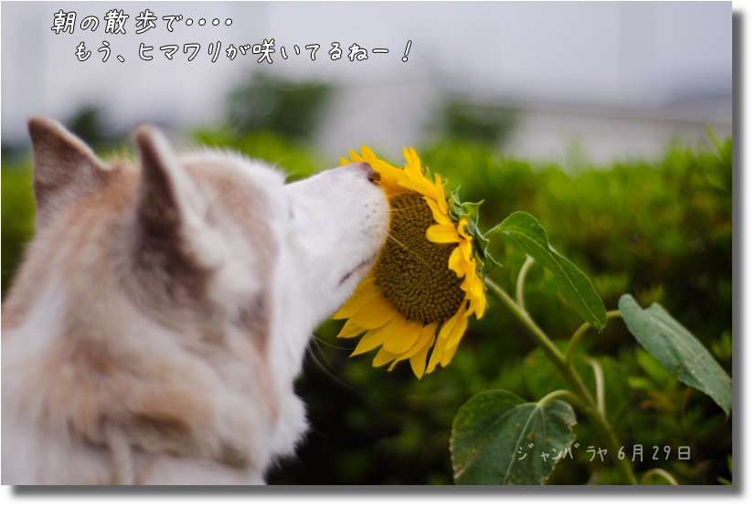 DSC_3200g1.jpg