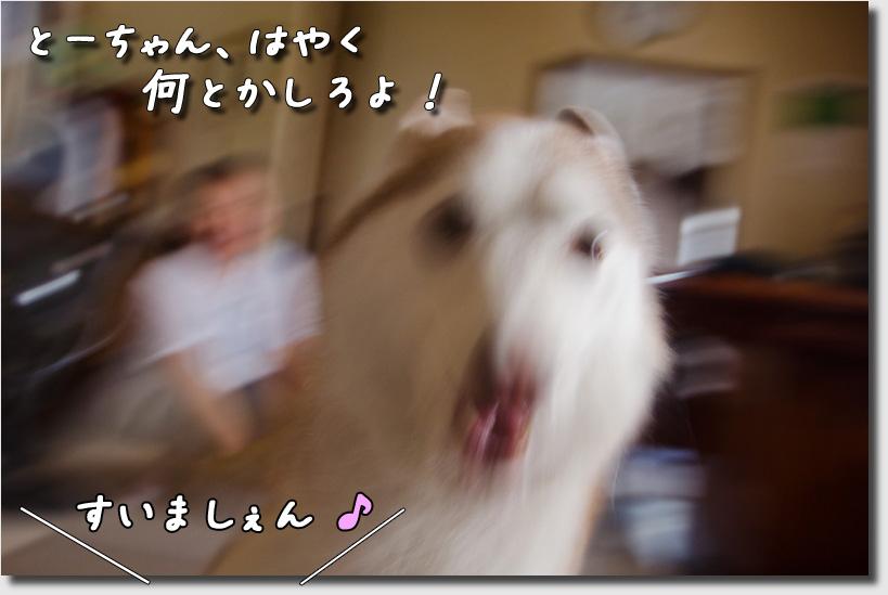 DSC_3221h1.jpg