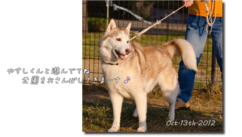DSC_3306j1.png