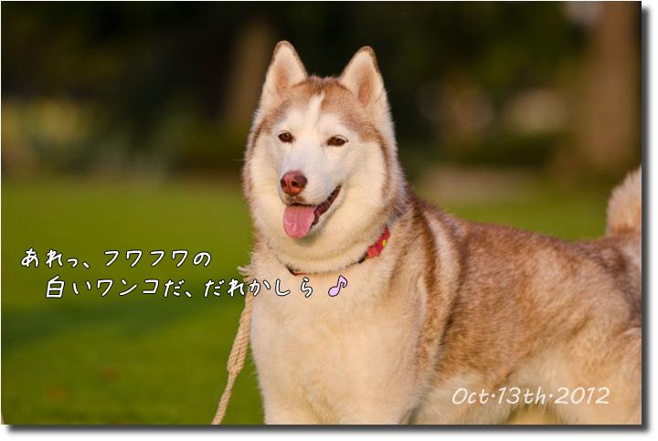 DSC_3425j1.jpg