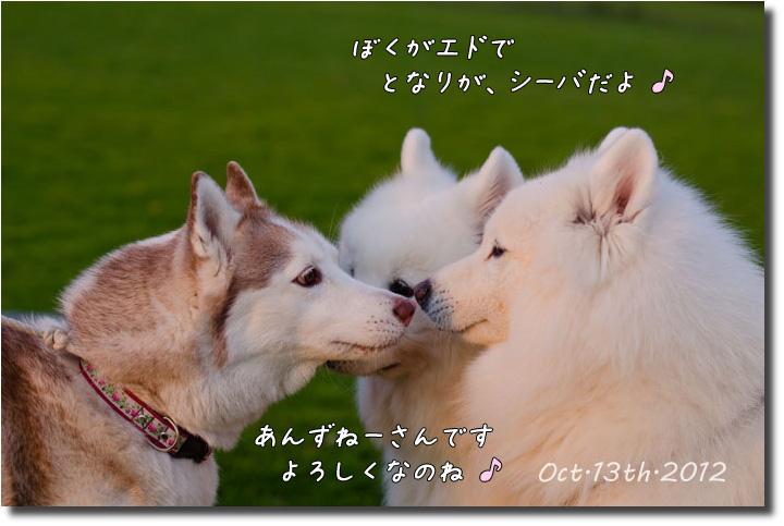 DSC_3430j1.jpg