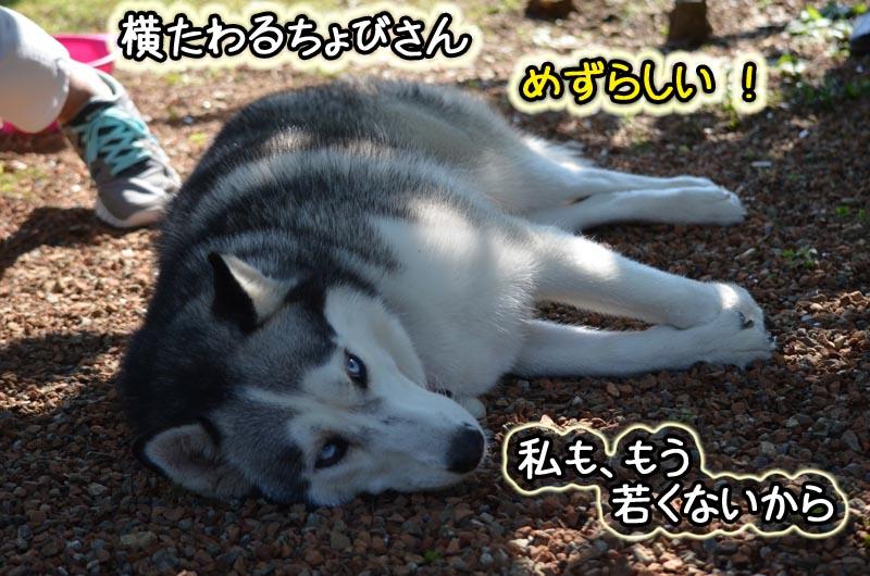 DSC_3567.jpg
