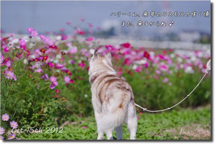 DSC_4227j1.jpg