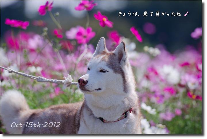 DSC_4252j1.jpg