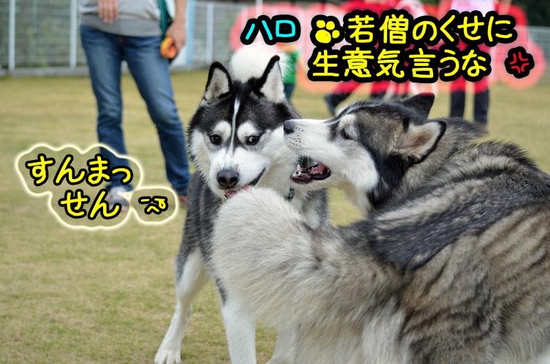 DSC_4309-14.jpg