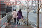 (1)雨上がりの少し濡れた路を仲良く並んで~♪DSC_4361e.jpg