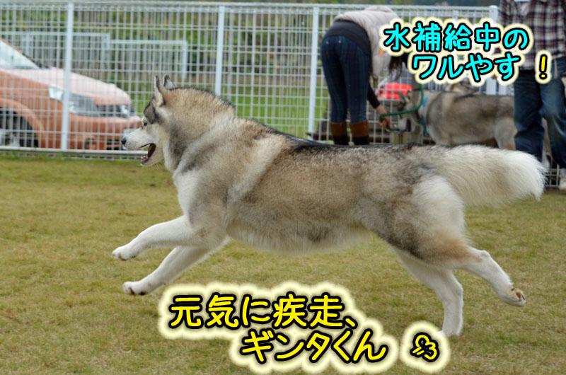 DSC_4372-14.jpg