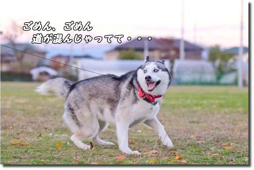 DSC_4477k1.jpg