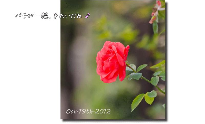 DSC_4546j1.png