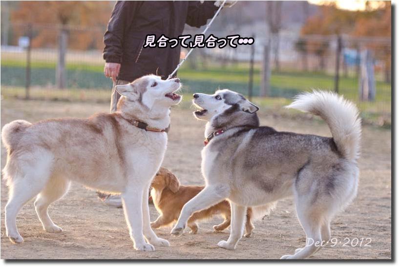 DSC_5135k1.jpg