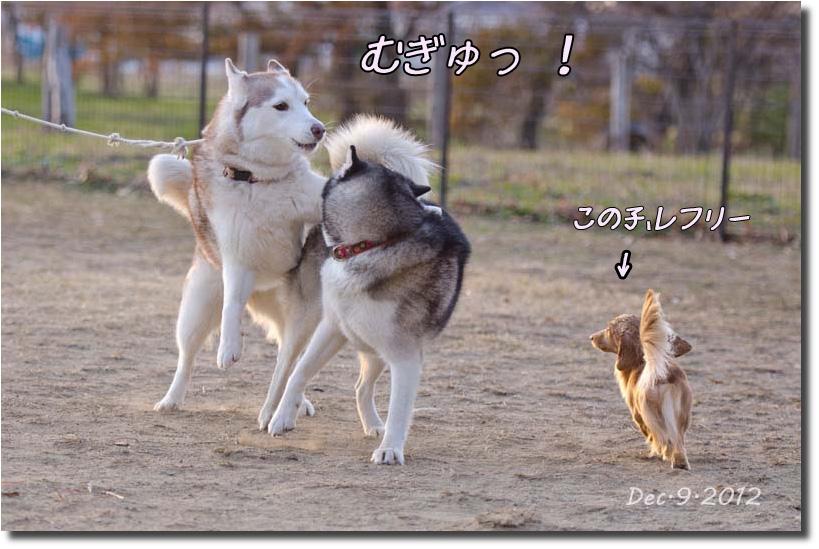 DSC_5136k1.jpg