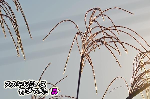 DSC_5143.jpg