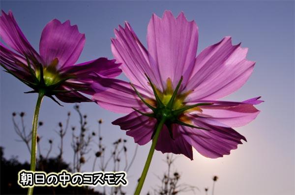 DSC_5156.jpg