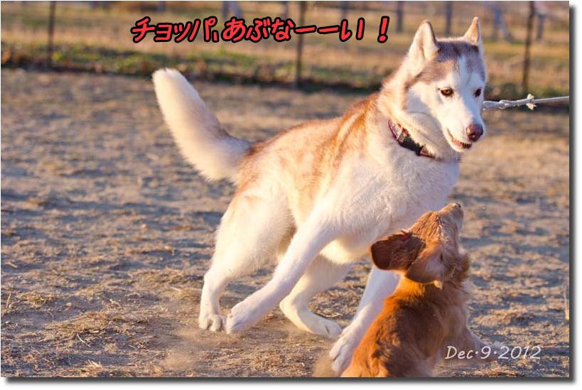 DSC_5169k1.jpg