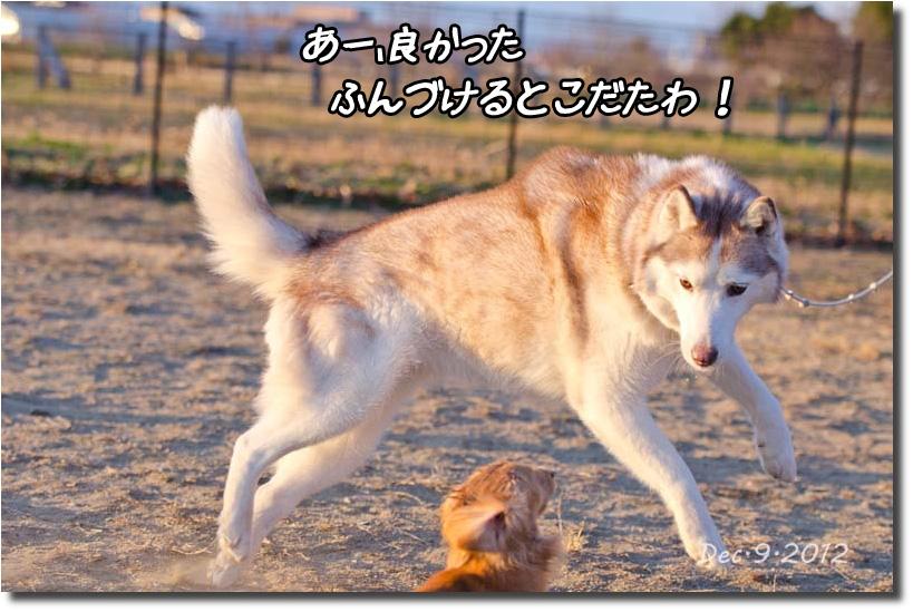 DSC_5170k1.jpg