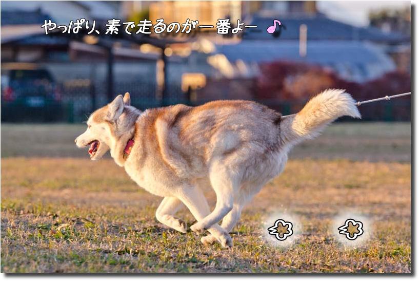 DSC_5991k1.jpg
