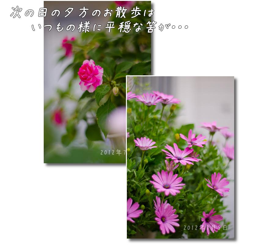 DSC_6008g1.jpg