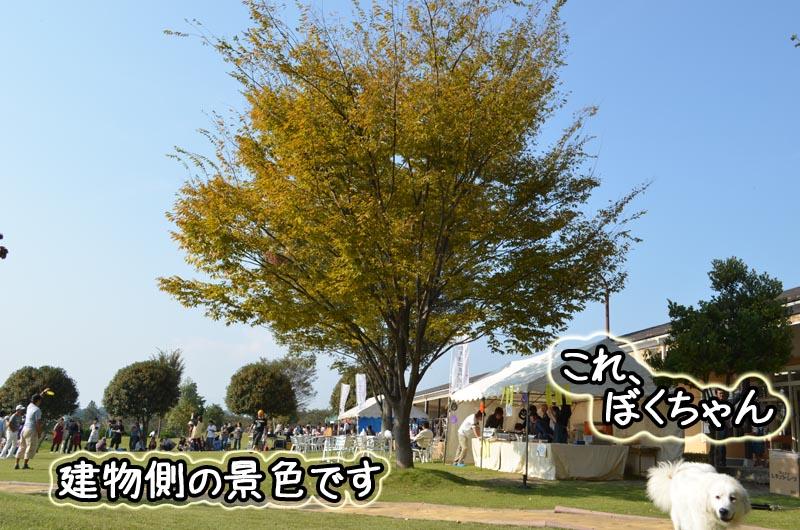 DSC_6015.jpg