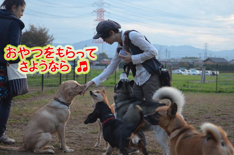 DSC_6047a.jpg