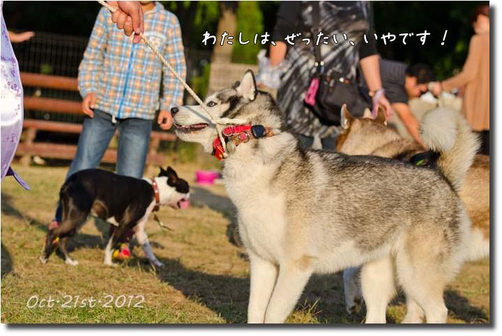 DSC_6092j1.jpg