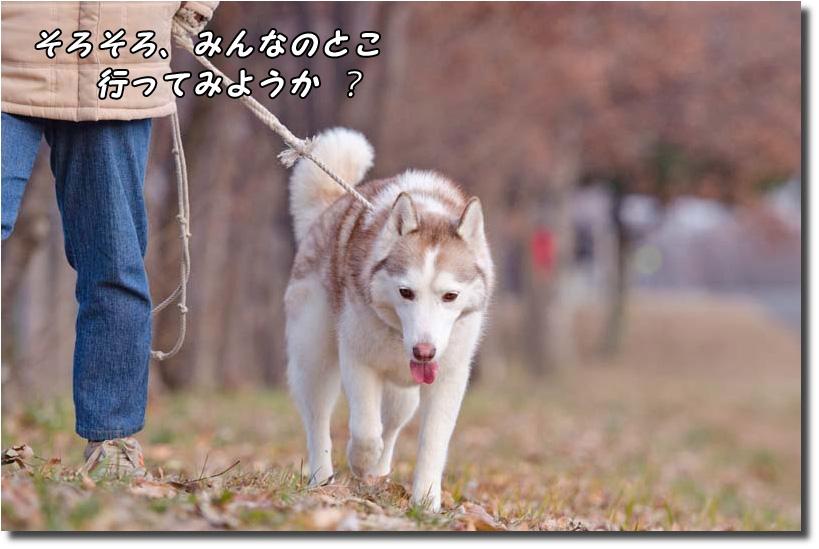 DSC_6714k1.jpg