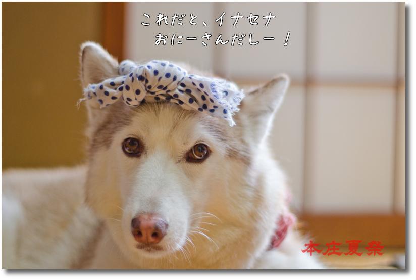 DSC_6879g1.jpg
