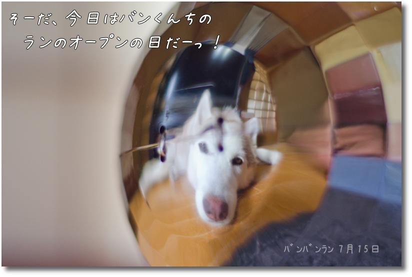 DSC_6919g1.jpg