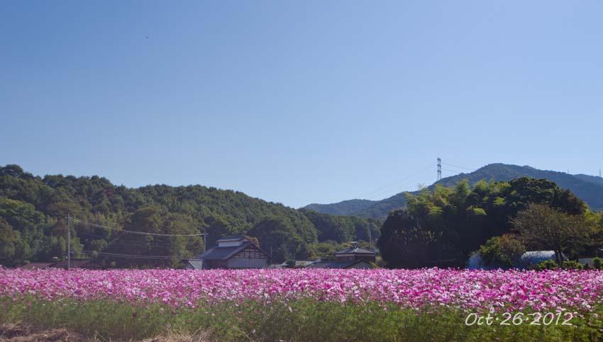 DSC_6939j1.jpg