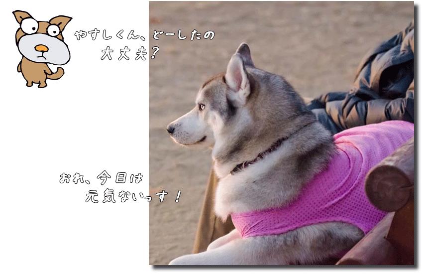 DSC_7128k1.png