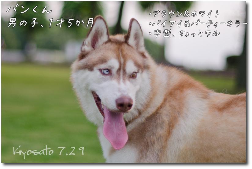 DSC_7253g2.jpg