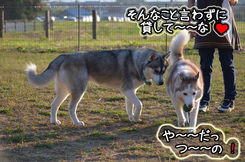 DSC_7315.jpg