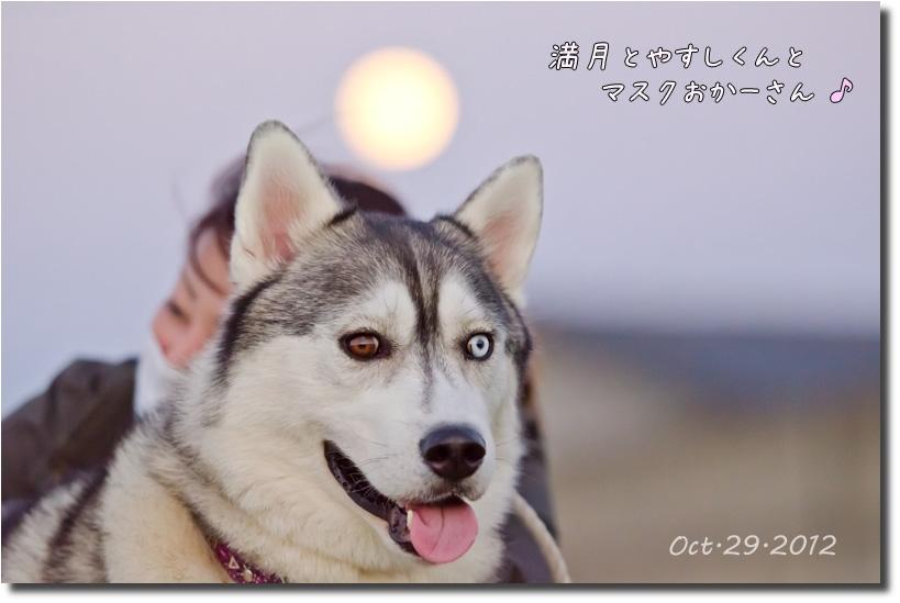 DSC_7369j1.jpg