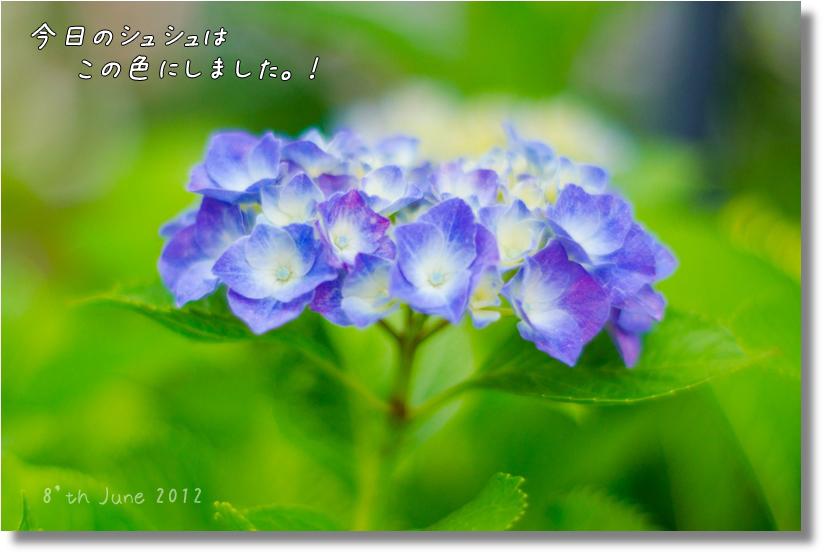 DSC_7390f2.jpg