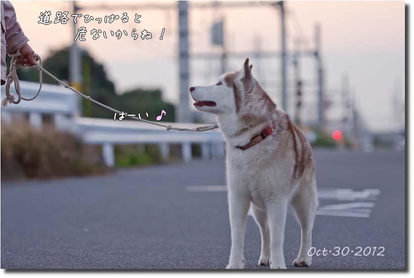 DSC_7512j1.jpg