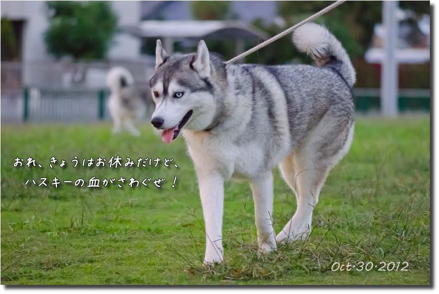 DSC_7570j1.jpg