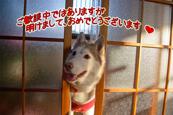 DSC_7573d.jpg