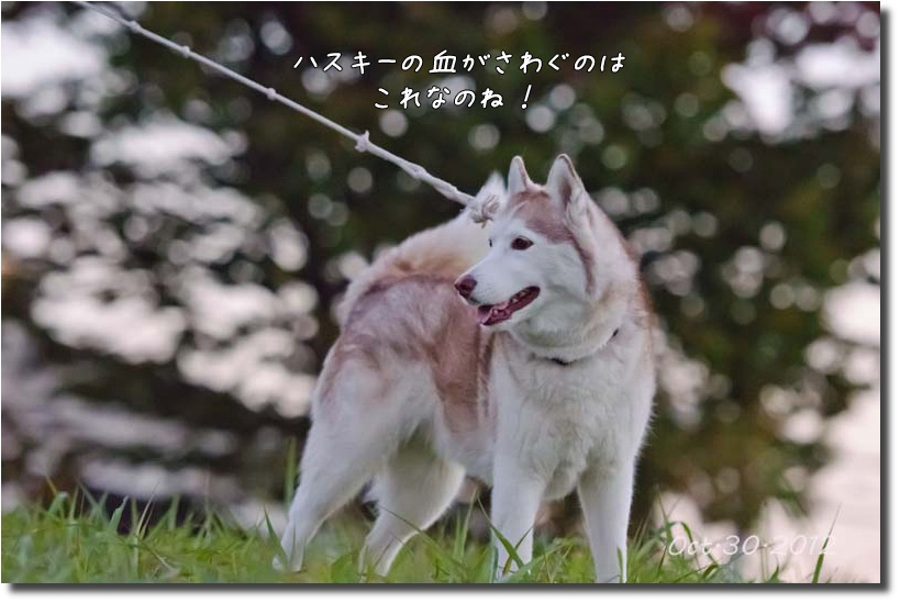 DSC_7574j1.jpg