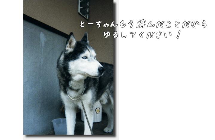 DSC_7910h1.png