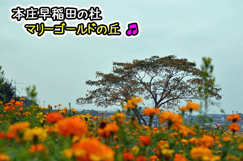 DSC_7992.jpg