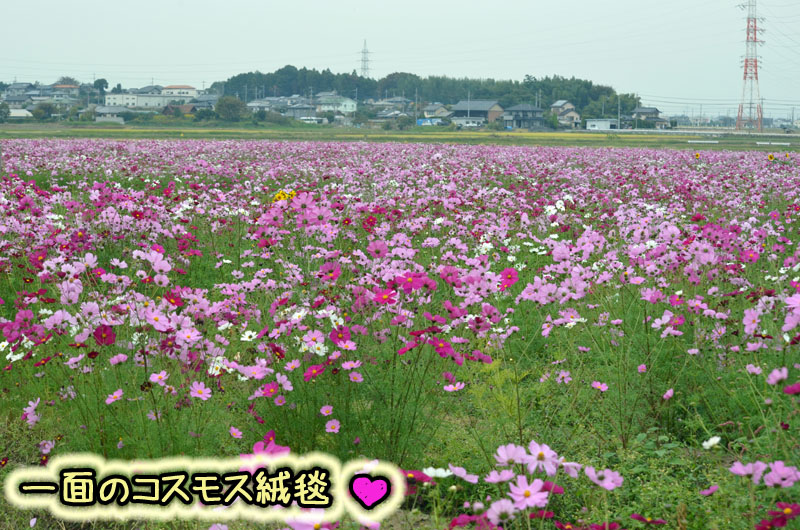 DSC_8092.jpg