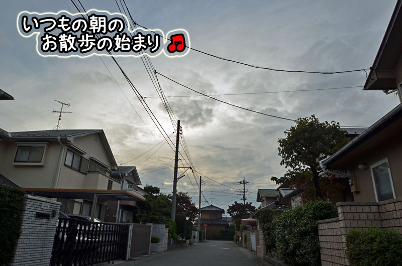 DSC_8369.jpg