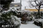 (5)庭にも3cm程の雪が~♪DSC_8457e.jpg