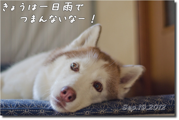 DSC_8470h1.jpg