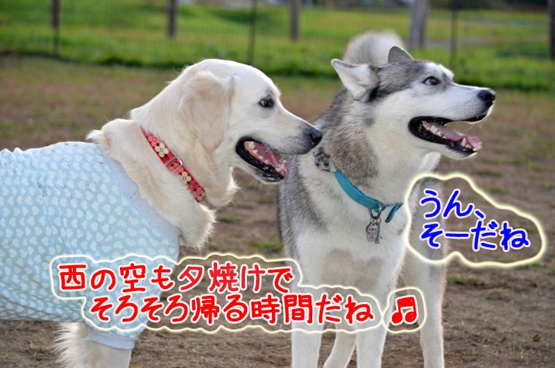 DSC_8669e.jpg